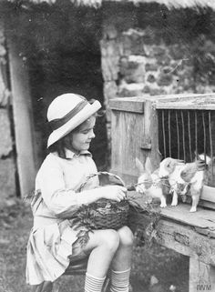 A young girl feeding rabbits on a British farm during the First World War - 1918
