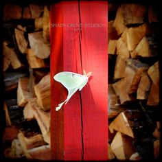 Luna moth on a Red barn pole by shadygroveimages on Etsy,