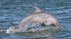 Dolphin Research & Sea Life Nature Center - $25 - 110 N Garcia, South Padre Island, TX 78578