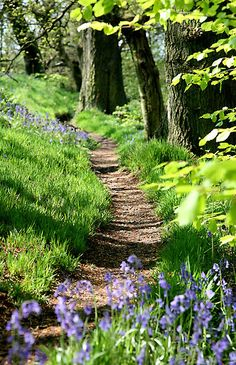 A Path through the Woods