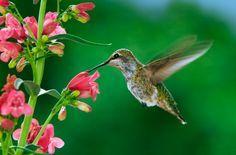 Confira algumas flores que atraem beija-flor e borboletas para cultivá-las em…