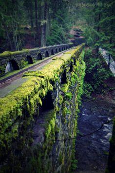 Foot bridge near falls at Whatcom Falls State Park    Bellingham, WA