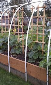 Like these raised beds with the cover frame over it.