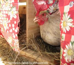 The Chicken Chick®: Beat the Heat: Helping Chickens Survive High Temps