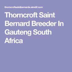 Thorncroft Saint Bernard Breeder In Gauteng South Africa Saint Bernard Breeders, Saint Bernards, South Africa, Saints, Santos, St Bernards