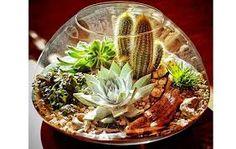 Resultado de imagem para desert terrarium
