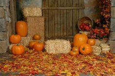 Photography Tips , Fall Mini Session ideas Halloween Mini Session, Halloween Photos, Fall Halloween, Photography Mini Sessions, Photography Backdrops, Photo Backdrops, Digital Backdrops, Photo Props, Halloween Photography