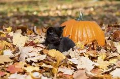 20 Cute and Funny Animal Fall Pictures You'll Love More than PSL #fallmemes #cutememe #cuteanimals #funnyanimals #animalmemes Funny Animal Pictures, Funny Animals, Cute Animals, Funny Pets, Wtf Funny, Hilarious, Lestat And Louis, Autumn Animals, Fall Memes