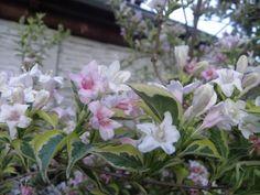#flowers #garden