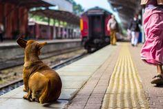 Dog waiting for the train by FabriceCadiou #ErnstStrasser #SriLanka