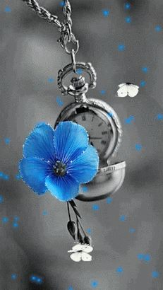 Color of gray on pinterest color splash red roses and - Plants with blue flowers a splash of colors in the garden ...