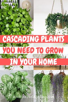 10 Cascading Plants You Can Grow Indoors for Home Decoration is part of Hanging plants indoor - 10 Cascading Plants You Can Grow Indoors for Home Decoration Pastel Dwelling Discover our best practices for gardening and inhome diy! Inside Plants, Ivy Plants, Cool Plants, Pots For Plants, Types Of Air Plants, Jade Plants, Small Plants, Green Plants, Best Indoor Plants
