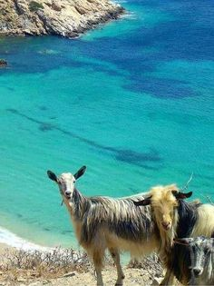 Greece Islands, Feeling Happy, Crete, Wonderful Places, Countryside, Nature, Nautical, To Go, Photos