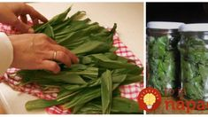 Stačí ho len dať do pohára a zaliať: Tento recept z medvedieho cesnaku vám posilní imunitu, prečistí obličky a poradí si aj s vysokým tlakom! Korn, Green Beans, Vegetables, Vegetable Recipes, Veggies