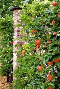 spalderas de manzanas