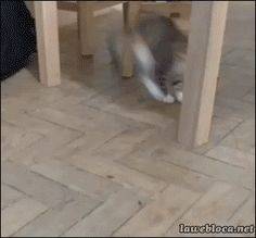 Cats Versus... Well Anything! (10 Hilarious Gifs)