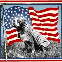 Sergeant Stubby The Boston Terrier – The Original Dog Of War