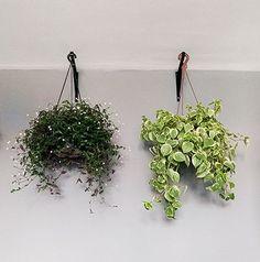 5 tipos de plantas que sobrevivem bem em vasos pendentes e em ambientes internos.