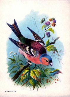 Bosque Vintage Imprimir Pájaro del arco iris