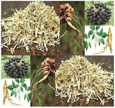 14 Best Ginseng images in 2014 | Medicinal plants, Growing ginseng
