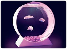 Jellyfish tank. THIS IS WHAT I WANT FOR CHRISTMAS.