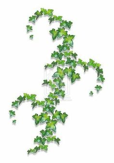 Ivy tattoo