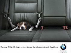#perro atrapado en asiento trasero del #coche ;))