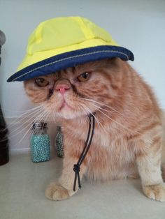 mr.fozz and his cool new hat