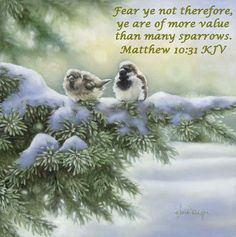 """Our Heavenly Father takes care of everything, even the sparrows in the dead of winter.  His love for us is more valuable and will provide for all our needs.  Praise God!  """"Fear ye not therefore, ye are of more value than many sparrows.""""  Matthew 10:31 KJV"""