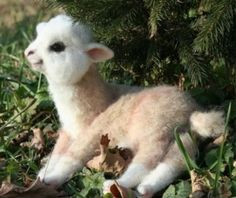 Stop everything! Baby llama.