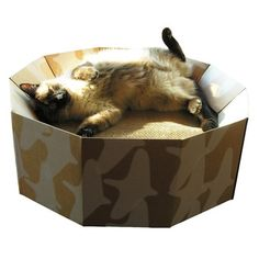 Iti Cardboard. Your cat can lounge luxuriously on the bowl-shaped structure and have his body supported at just the right angles. And when his snoozefest is over and it's time for a little fun, he can indulge in a scratching frenzy on the reversible scratchdeck. The Iti is also equipped to handle multiple cats because good times always love company.