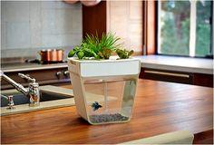 Slim: een moestuin en vissenkom in één! #interieur #inspiratie