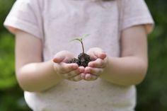 Pianeta Foresty: i semi del futuro