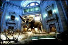 Best 12 Museums for Kids in the Washington, DC Area: National Museum of Natural History