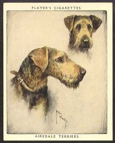 Players Airedale card