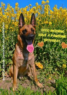 Have a Pawsome Saturday :D  www.facebook.com/cash.von.badeleben