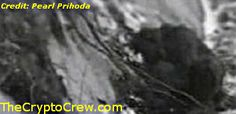 Bigfoot - I like Dirt Video - Amazing clip of bigfoot digging in dirt. Rare Clip! Check out our enhancement http://www.thecryptocrew.com/2014/05/bigfoot-i-like-dirt-video.html
