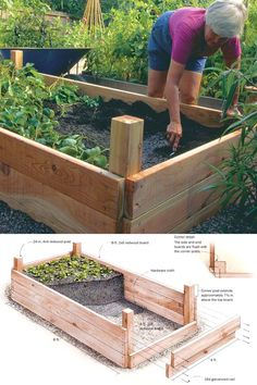 Growing vegetables in raised beds. Get more food from better soil with less water with raised beds. Landscape designer Linda Chisari shares her design (and materials list), along with advice on sizing and adding a convenient irrigation system. Raised Garden Beds, Raised Beds, Raised Gardens, Container Gardening, Gardening Tips, Garden Boxes, Vegetable Garden Box, Herb Garden, Edible Garden
