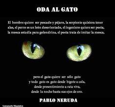 Oda al gato (de Pablo Neruda)