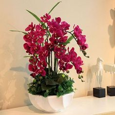 Sky Blue Phalaenopsis Orchid Seeds Flower Seeds Indoor Bonsai Orchids 100 particles / lot