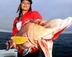 Learn how to catch hogfish on hook and line at FishTrack.com. Photo: @keywestphotog #hogfish #landsucks