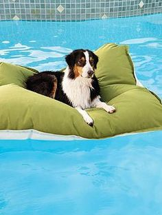 Your pet will love joining your pool parties on the plush Pet Kai Float; a stable and stain-resistant float that is sure to delight your pet and guests alike.