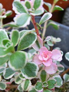 Succulents Cactus Flowers 14 | Flickr - Photo Sharing!