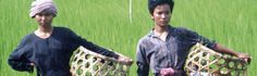 The Land of the Wandering Souls (1999) The film follows a Cambodian family as they work to dig a trench across Cambodia to lay the country's first optical fiber cable, depicting their hardships.