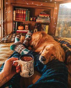 a golden retriever. Cute Puppies, Cute Dogs, Dogs And Puppies, Doggies, Animals And Pets, Cute Animals, Autumn Cozy, Cosy Winter, Winter Love