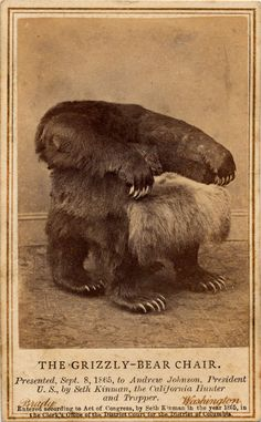 Poor Grizzly Bear, killed to make a chair. Grizzly Bear chair- presented by Seth Kinman to Andrew Johnson in Mountain Man, Old Photos, At Least, Photoshop, Believe, Cool Stuff, Interesting Stuff, Man Stuff, Random Stuff
