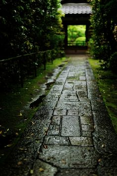 the approach to Koto-in temple, Kyoto, Japan 高桐院 京都