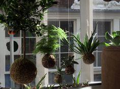 string gardens | ... Pear Diaries: Fedor van del Valk: String Gardens (jardines de cuerda