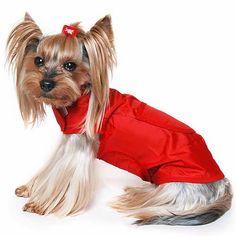 A(z) Yorkshire Terrier nevű tábla 7 legjobb képe | Terrier