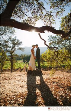Sonoma Wedding Photography, BR Cohn Winery- Wedding Portrait by Natalie Moser Photography